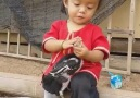 Civciv'i dikkatle yıkayan sevimli minik kız