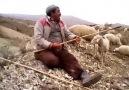 Çoban Abiden - Kostak  ( 2014 )