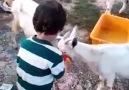 Çocuklarınızı hayvan sevgisi ile yetiştirin