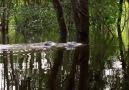 Çok Az İnsanın Bildiği Gizemli Dünya Nehir Yunusları Belgesel Günlüğü