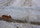 Cold Dog Walks On Two Paw