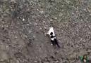 Çukura düşen yavru köpeği kurtaran güzel kedi