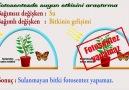 3 dakikada 11 fotosentez deneyi D Öğrenmeyen kalmasın )