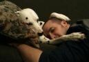 Dalmatian Cuddle Sesh