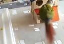 Damn parrot - Singapore Incidents