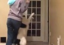 Dancing with your Dog