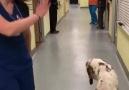 Dans eden kuzucuk