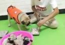 Daym Drops Entertainment - Smart Dog &lt3 Facebook