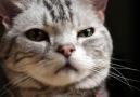 Dear Kitten...