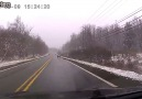 Deer Slips on Icy Road