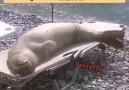 Deli firtina - Vallahi 155 ararin suya girGüneş yağıda...