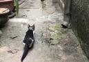 Delikanlı Sözler - Oha kedi bak nasıl yakaladı Facebook