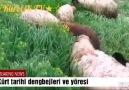 Dengbjler - Can can Facebook