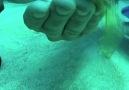 Denizde Yumurta Kırmak