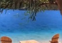 Deniz Kızı - Zerrin Özer - O Yaz
