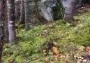 Deprem esnasında ormanda olanlara bakarmısınız...