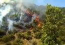 Dersimden sonra Bingölde ateşe verildi. Bingöl Ormanları da yanıyor !
