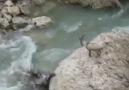 Dersim&olmaktan gurur duyuyorum diyenler - Dağ keçileri Facebook