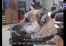 Dert sahibi konuşan köpek )