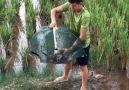Derya Can - Balık Tuzağı