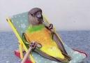 Desi Ratnasari - Incredible Smart Parrot Facebook