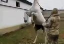 Diriliş Ertuğrulun Atı Aktolgalı