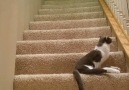Disabled Cat Climbs The Stairs