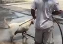 Dış Köpek Yıkama 10 TL