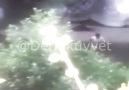 DiyarbakırLice de mağara da kıstıran teröristin teslim olma anları