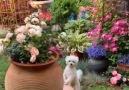 DIY Flower - Engaging Beautiful Scenery Facebook