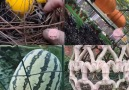DIY Flower - Fruit Surprise Facebook