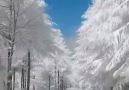 DIY Flower - Winter Is Interesting Facebook