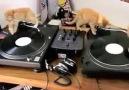 Dj Kitty und Freunde :)