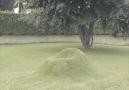 Doğal çimden oturak