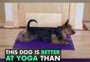 Dog Does Yoga