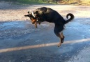 Dog Loves To Jump On Ice