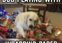 Dog Playing With Wrapping Papper