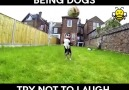 Dogs that struggle with life.
