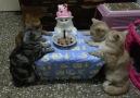 Doğum günü partisi yapan kediler.. :))