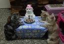Doğum günü partisi yapan sevimli kediler