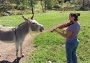 Donkeys are absolutely ADORABLE