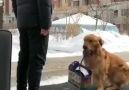Dostunun gidişine dayanamayıp valizini toplayan köpek.