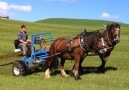 Do you think machines should replace horses on farms