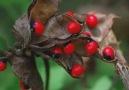 Dünyanın En Tehlikeli ve En Ölümcül 10 Bitkisi