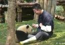 Dünyayı pandalar kurtaracak belki de )