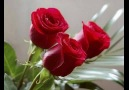 ✿✿ Red Roses For You ✿✿