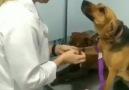 egedesonsoz.com - Doktoruna aşık olan köpek... Facebook