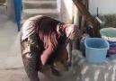 Egeli Hatice teyzemizin hayvan sevgisi. İnsanı mutlu etme garantili video
