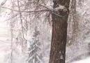 Eğer kar yağınca içeri gireceksen... - Papatya Kokulu Szler