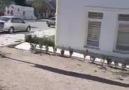 Elazığ CİTY - Baskil ilçemizde Hayvan Kurtarma Operasyonu